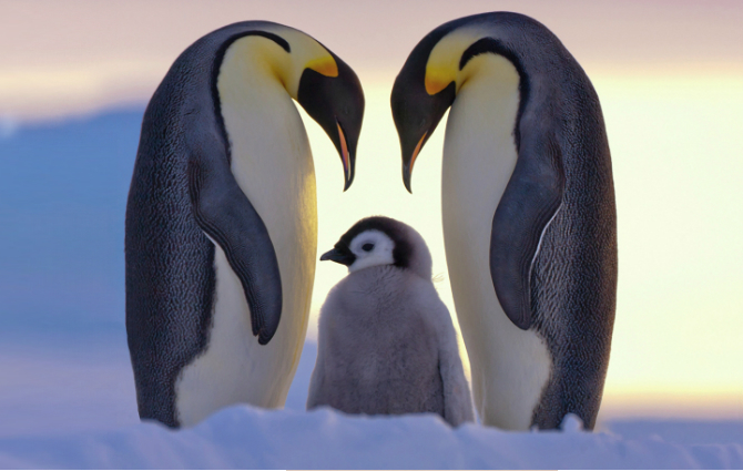 Простые поделки с детьми. Как сделать пингвина из бумаги