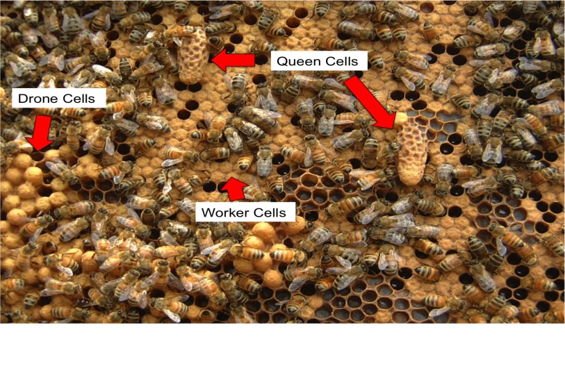 Bee Timings - What and Why? Part 1