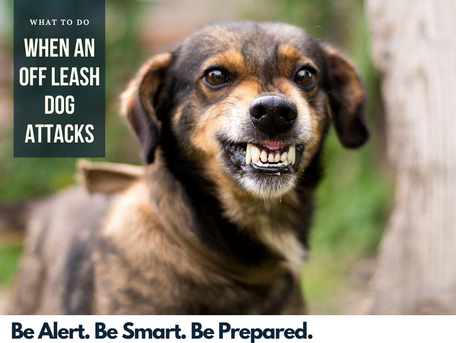 What To Do When An Off Leash Dog Attacks